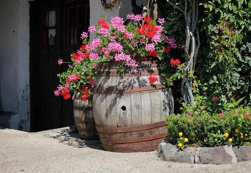 planted wooden barrel