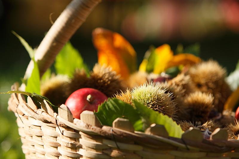 autumn basket with chestnuts, apples and leaves